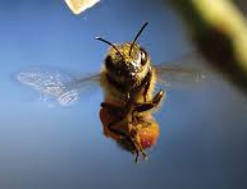 Why Bees Fascinate Us